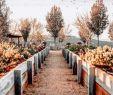 Herbst Garten Reizend 𝐈𝐧𝐬𝐭𝐚𝐠𝐠𝐚𝐦 𝐚𝐧𝐝 Autumn 𝐚𝐧𝐝