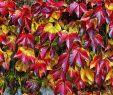 Herbst Garten Schön Du Willst Einen Bunten Herbstgarten