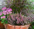 Herbstbepflanzung Für Kübel Und Balkon Garten Das Beste Von Herbst Pflanzen Und Deko Für Balkon Und Terrasse
