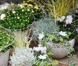 Herbstbepflanzung Für Kübel Und Balkon Garten Einzigartig Herbstbepflanzung Für Kübel Und Balkon Garten Ideen