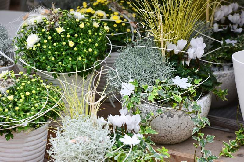 herbstbepflanzung fur kubel und balkon garten ideen herbstbluher und blumen fur beet und balkon pflanzen breuer