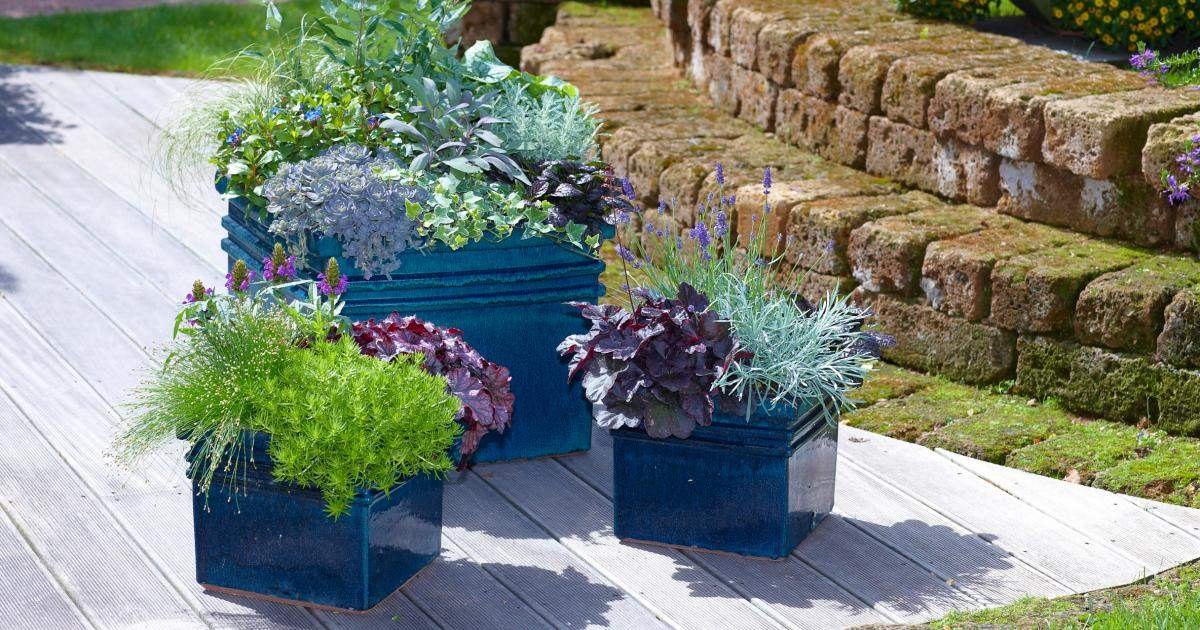 herbstbepflanzung fuer balkon und terrasse