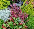 Herbstbepflanzung Für Kübel Und Balkon Garten Elegant Herbstbepflanzung Für Kübel Und Balkon Garten Ideen