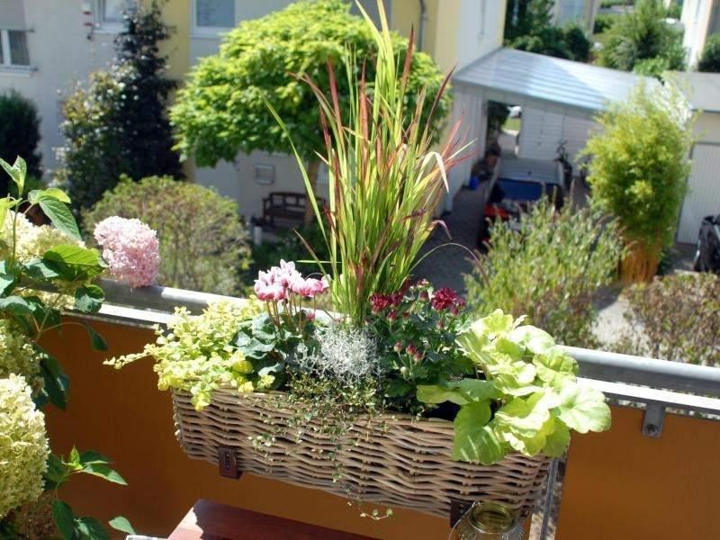 haus und garten artikel ein pflanztipp fuer den balkon im herbst arid