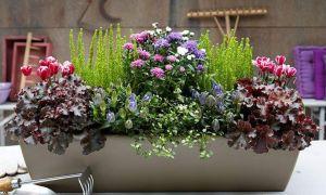 31 Schön Herbstbepflanzung Für Kübel Und Balkon Garten Einzigartig
