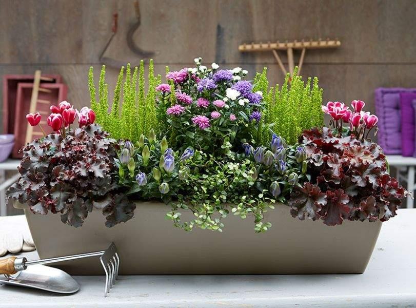 Herbstbepflanzung Für Kübel Und Balkon Garten Genial Herbstbepflanzung Balkon
