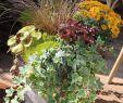 Herbstbepflanzung Für Kübel Und Balkon Garten Genial Herbstbepflanzung Für Töpfe Und Kübel