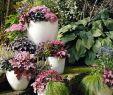 Herbstbepflanzung Für Kübel Und Balkon Garten Genial Herbstzauber Für Garten Und Balkon