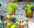 Herbstbepflanzung Für Kübel Und Balkon Garten Inspirierend Herbstpflanzen In Beet Kübel Kasten