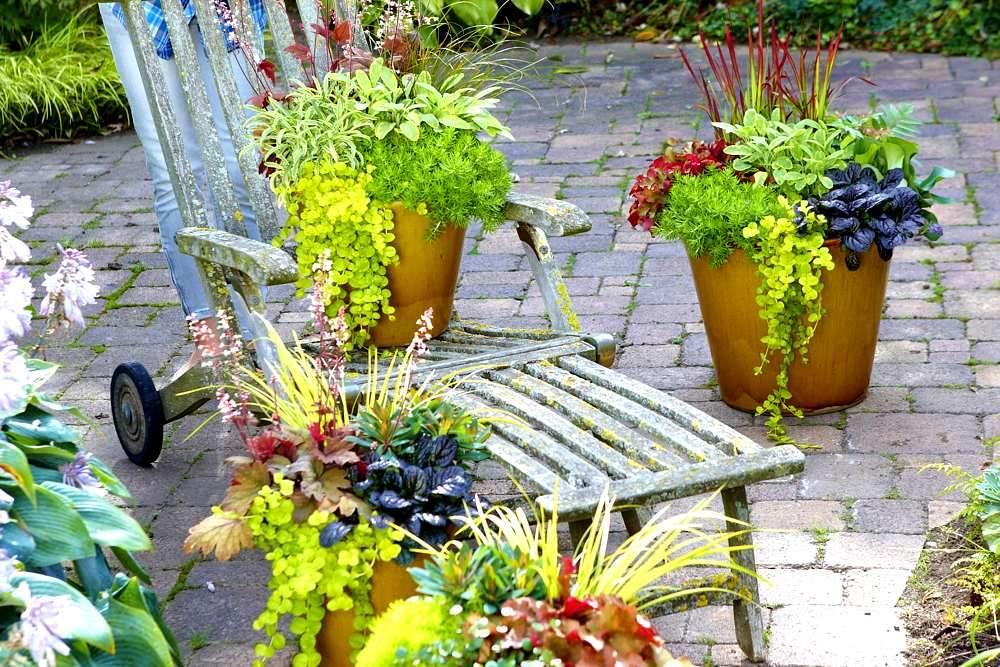 herbstpflanzen in beet kuebel kasten