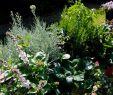 Herbstbepflanzung Für Kübel Und Balkon Garten Neu Balkon Und Terrasse Mit Pflanzen Gestalten