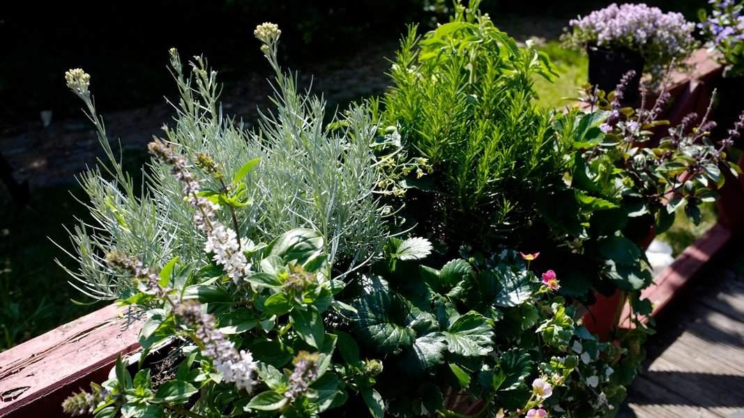 Balkon und Terrasse Pflanzen Gestaltung balkonundterrasse101