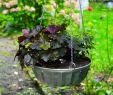 Herbstbepflanzung Für Kübel Und Balkon Garten Reizend Herbstbepflanzung Für Kübel Und Balkon Garten Ideen