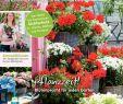 Herbstblumen Garten Winterhart Inspirierend Calaméo Mein Para S 2 2018 Risse