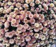 Herbstblumen Garten Winterhart Schön 14 Blumen Den Garten Verzaubern Ohne Arbeit Zu Machen