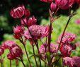 Herbstblumen Garten Winterhart Schön Blutrote Blumen Stockfotos & Blutrote Blumen Bilder Alamy