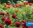 Herrenhäuser Gärten Eintritt Genial Eintrittspreise Preise Öffnungszeiten & Mehr