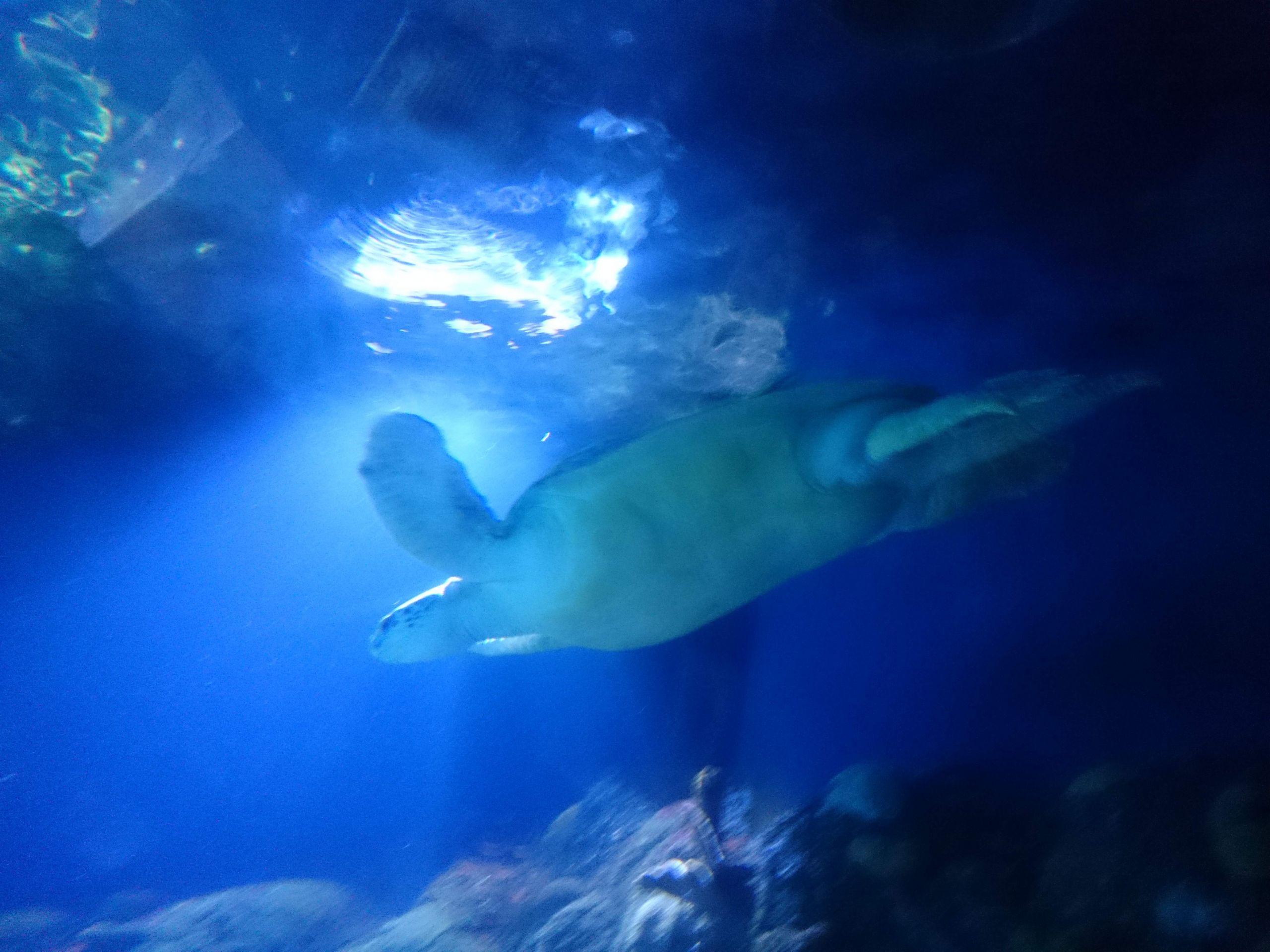 herrenhaeuser gaerten hannover und sea life