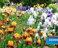 Herrenhäuser Gärten Eintritt Neu Eintrittspreise Preise Öffnungszeiten & Mehr