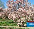 Herrenhäuser Gärten öffnungszeiten Neu Herrenhausen Hannover