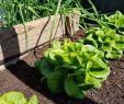 Hochbeet Garten Frisch Der Garten Im Mai