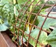 Hochbeet Im Garten Inspirierend Hochbeet Aus Cortenstahl Und Das Gärtnern Macht Wieder Mehr