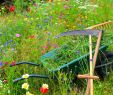 Hof Und Garten Einzigartig Pfle Ipps Für Ihre Gartengeräte