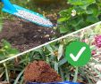 Hr Service Garten Inspirierend Statt Kunstdünger Natürlich Düngen Mit Pflanzen Und