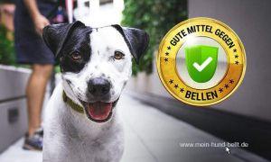 38 Einzigartig Hund Bellen Abgewöhnen Garten Neu