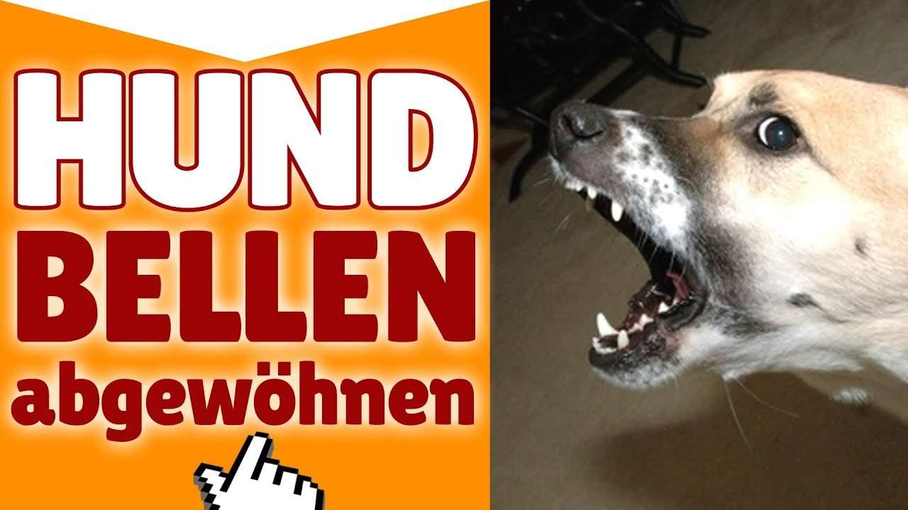 hund bellen abgewohnen ✓ wie du deinem hund das bellen abgewohnen mit hund bellen abgewohnen wenn es klingelt