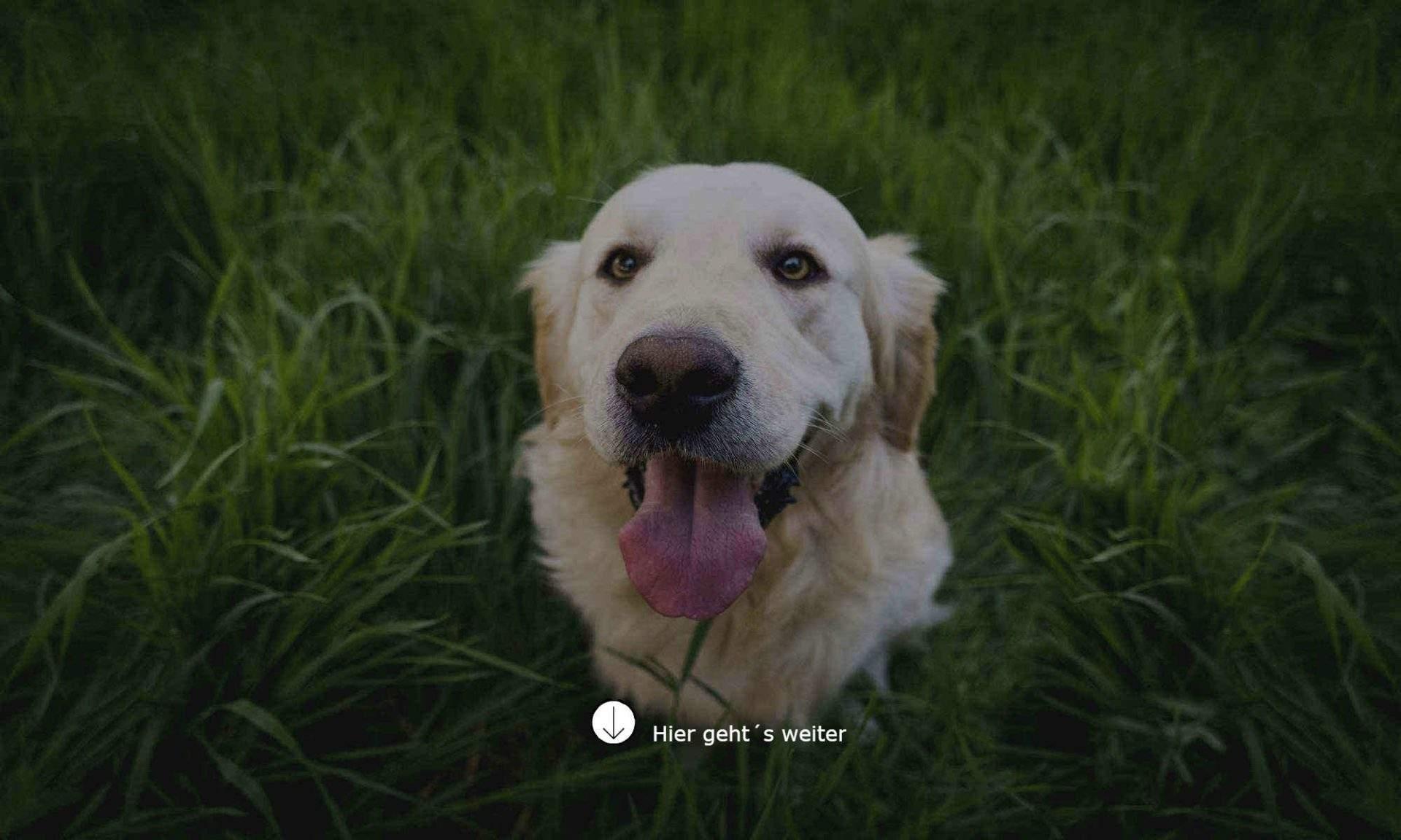 hund das bellen abgewohnen 10 wirkungsvolle tipps bei dauerbellen mit hund bellen abgewohnen wenn es klingelt