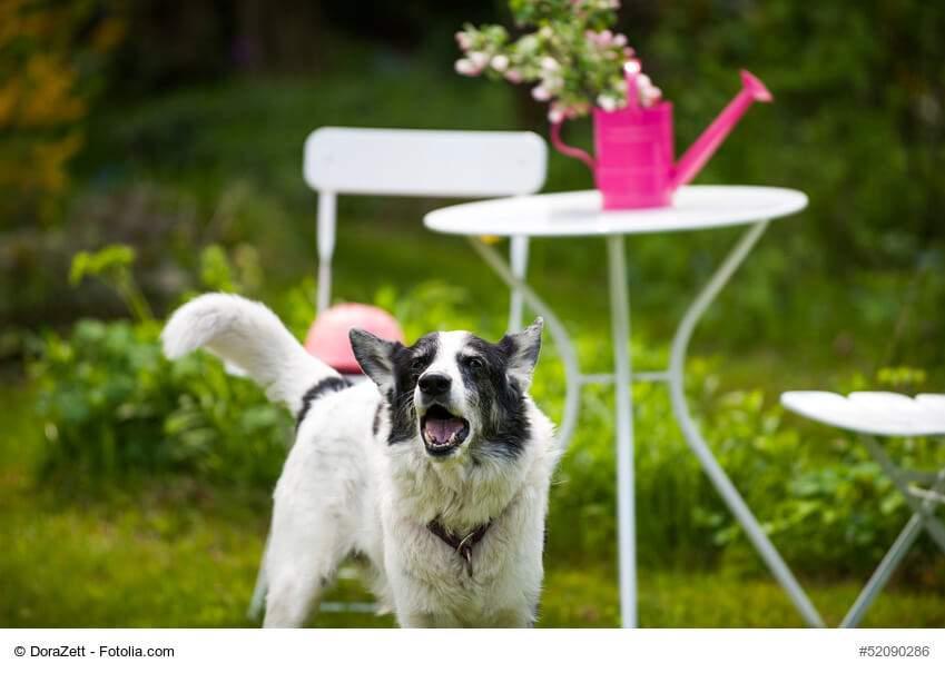 hund bellt immer im garten