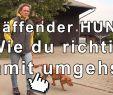 Hund Bellen Abgewöhnen Garten Reizend Kläffender Hund Wie Du Richtig Damit Umgehst