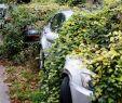 Hundeurin Neutralisieren Garten Elegant Fc Koeln Suche ist