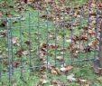 Hundezaun Garten Das Beste Von Scharnierpfosten Für Tür Graz
