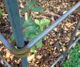 Hundezaun Garten Frisch Rankgitter Für Kletterpflanzen Frucht Oder Obststräucher
