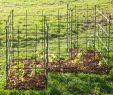 Hundezaun Garten Inspirierend Rankgitter Für Kletterpflanzen Frucht Oder Obststräucher