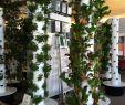 Hydroponischer Garten Inspirierend Aquaponics Aquaponics Aquaponic Gardening