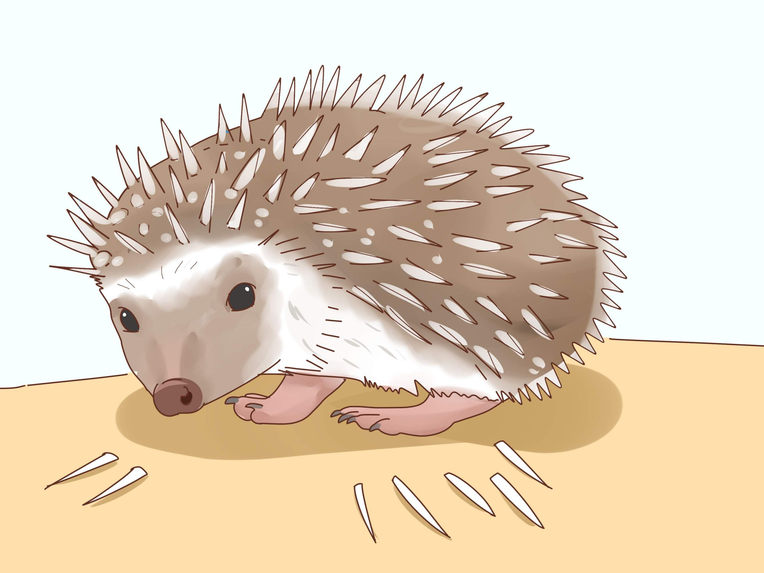 Take Care of a Hedgehog Step 26 Version 3