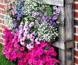 Igelfreundlicher Garten Neu Die 58 Besten Bilder Von Garten