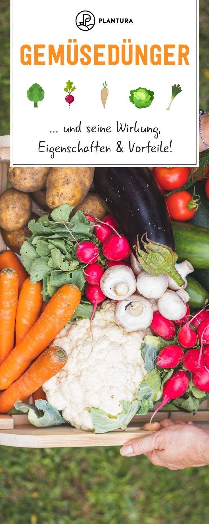 Ingwer Im Garten Das Beste Von Pin Auf Gemüsegarten Gemüse Anbauen Im Gemüsebeet