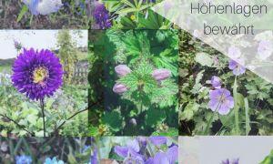 25 Reizend Insektenfreundlicher Garten Schön