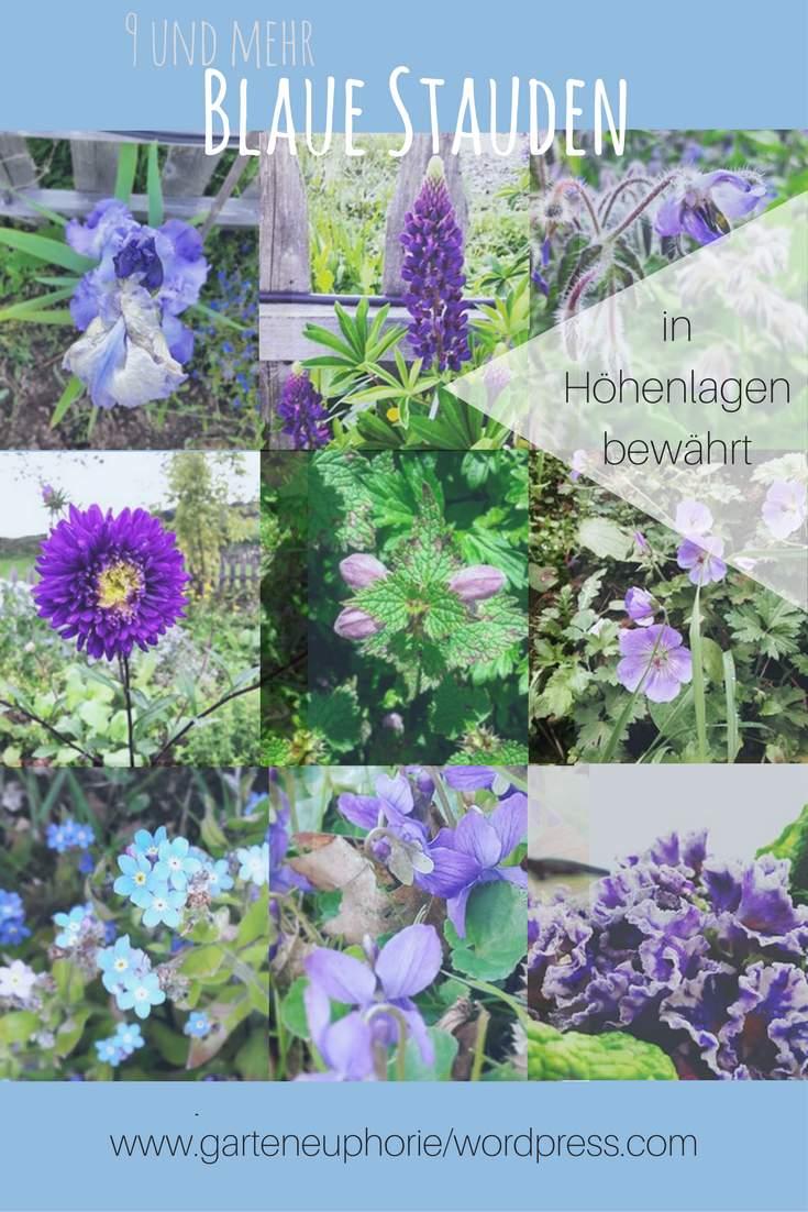 Insektenfreundlicher Garten Genial 9 & Mehr Blaue Stauden – Blaues Wunder Im Garten Auf 850 Hm