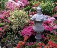Japanische Gärten Gestalten Inspirierende Fotos Und Gartenpläne Das Beste Von Japanischer Garten Tipps Zum Gestalten Und Anlegen Das Haus