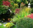 Japanische Gärten Gestalten Inspirierende Fotos Und Gartenpläne Neu Japanischer Garten – Gestaltungsideen