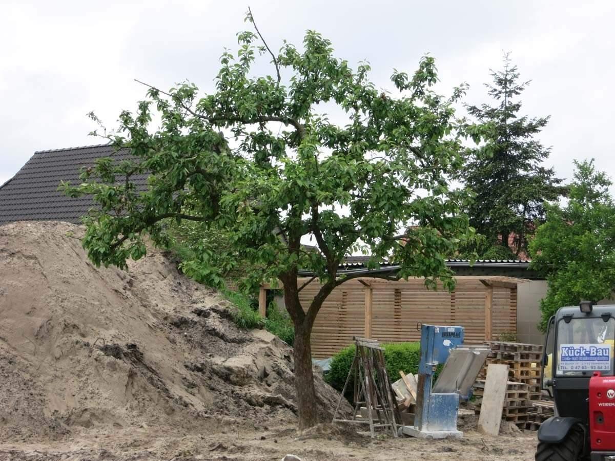 Garten Harburg Zwischenstand 2 2 1200x1200