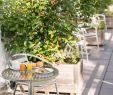 Japanischer Garten Freiburg Inspirierend Bischofslinde Ab 118€ 1̶3̶3̶€Ì¶ Bewertungen Fotos
