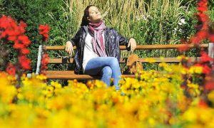 36 Genial Japanischer Garten Freiburg Neu