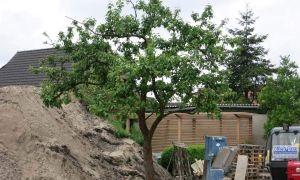 37 Schön Japanischer Garten Hamburg Neu