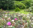 Japanischer Garten Hamburg Elegant Friedhof Ohlsdorf –
